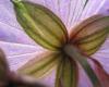 Фиолетовый красавчик