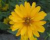 Солнышкин