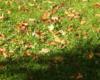 А осень уже берёт свои права