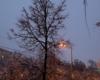 Кудрявое спящее дерево
