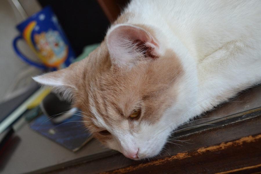 Кот Терентий в меланхолии